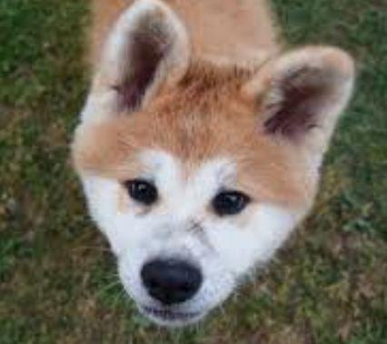 Psy Domowe I Pokojowe Cz 15 Pieski Blog Chów I Choroby Psów